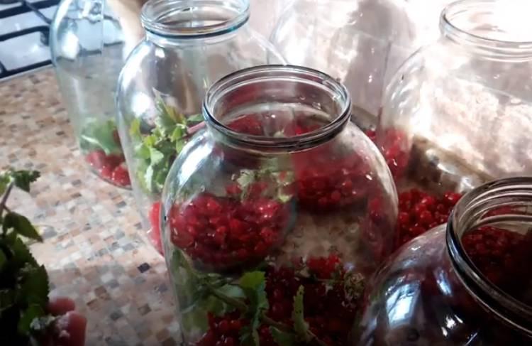 компот из красной смородины с мятой