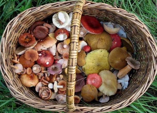 лесные грибы в корзине