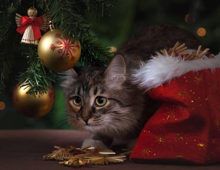 кот на новый год