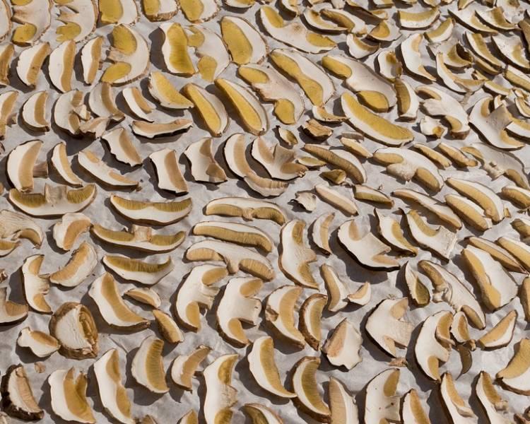 порезанные грибы сушенные в духовке на противне