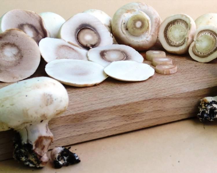 как сушить грибы шампиньоны