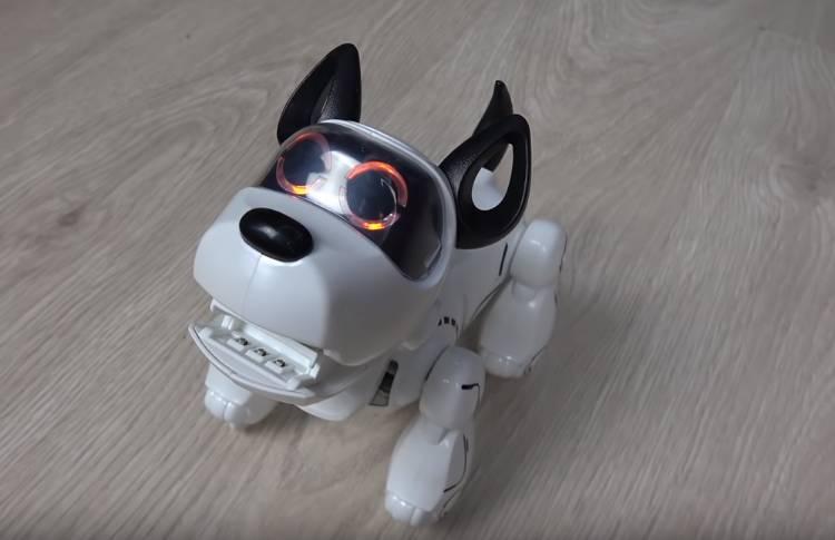 собака-роборт Purbo