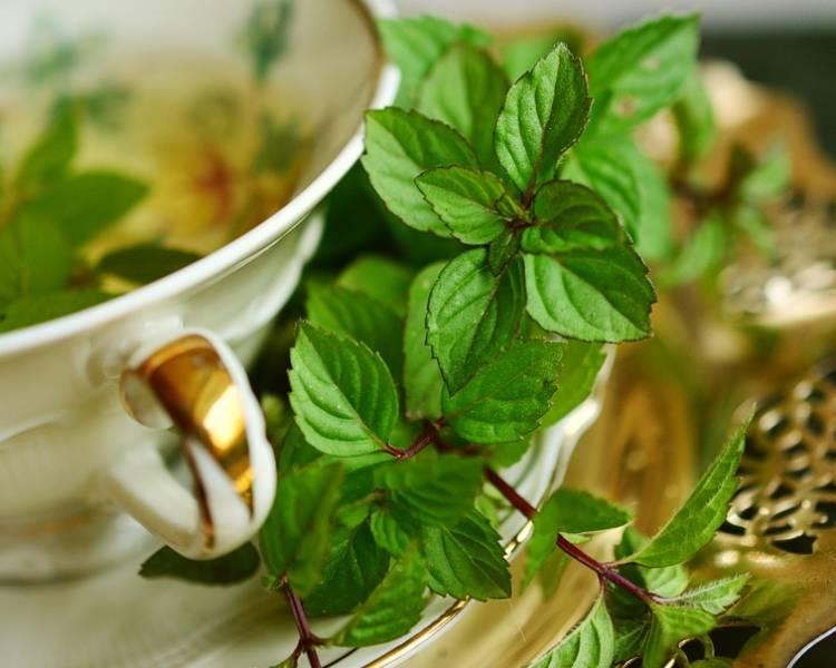 травяной чай для кишечника