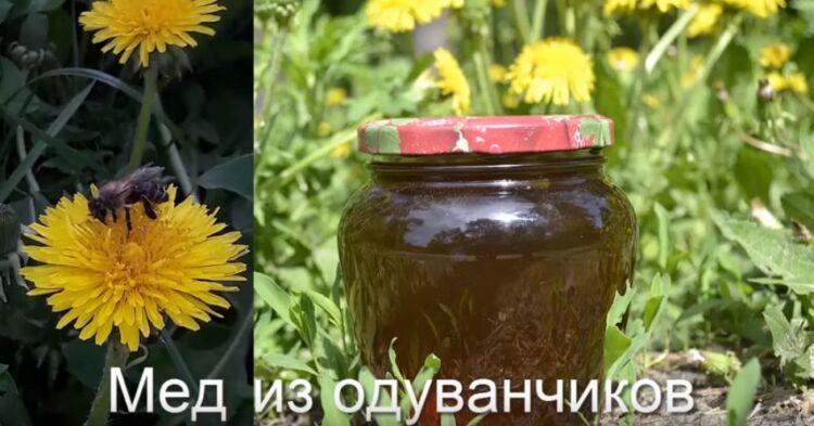 мед из одуванчиков с лимоном