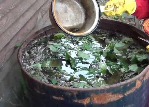 подкормка травяным настоем клубники