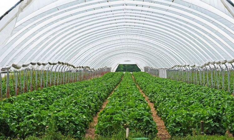 подкормка клубники весной для большого урожая