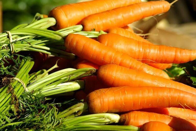 посадка моркови весной семенами в открытый грунт