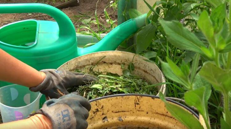 удобрение для подкормки растений из травы настой