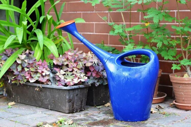 Дрожжевая подкормка растений