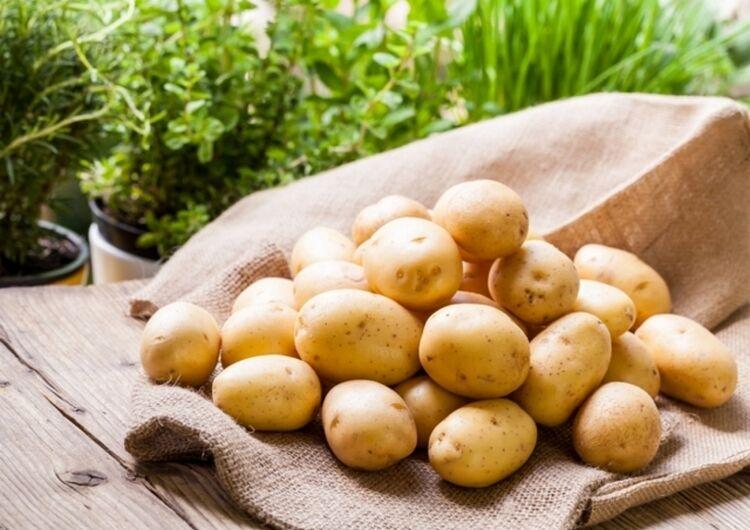 алена сорт картофеля