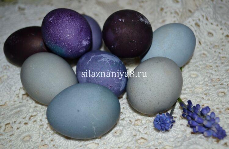 как покрасить яйца в чернике