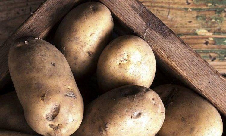 картофель уральский ранний