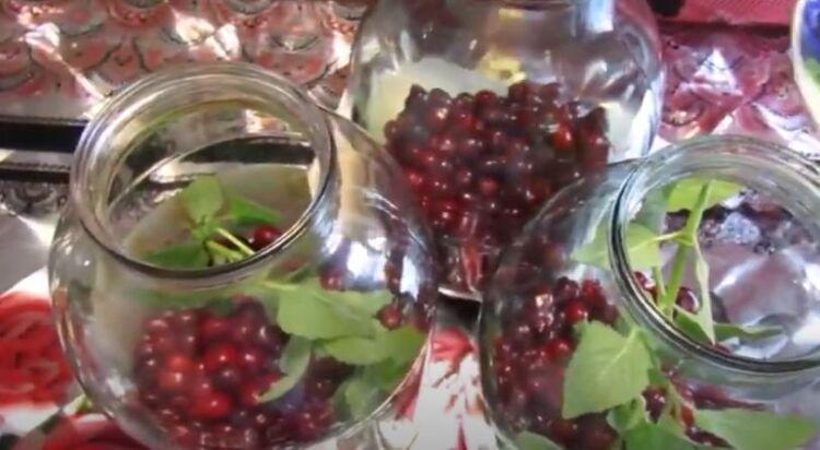 компот из вишни с мятой на зиму