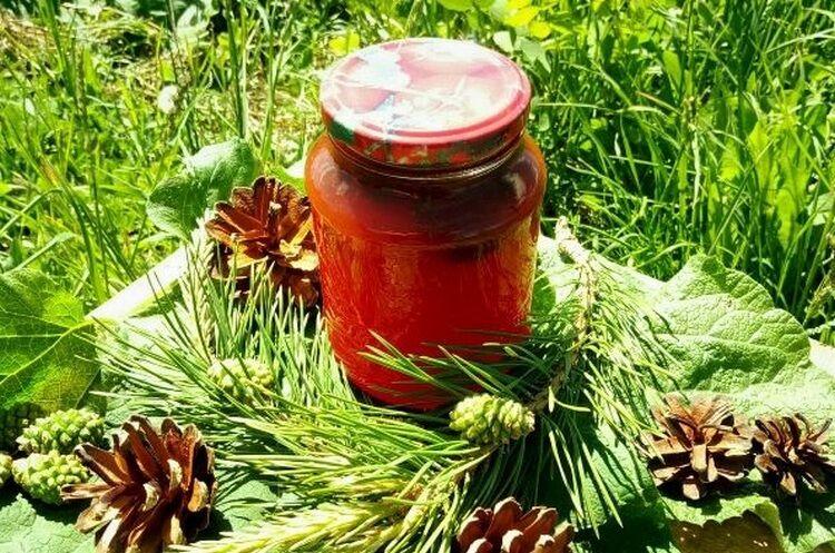 мед из сосновых шишек
