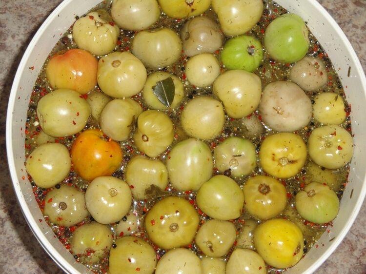 соленые помидоры зеленые