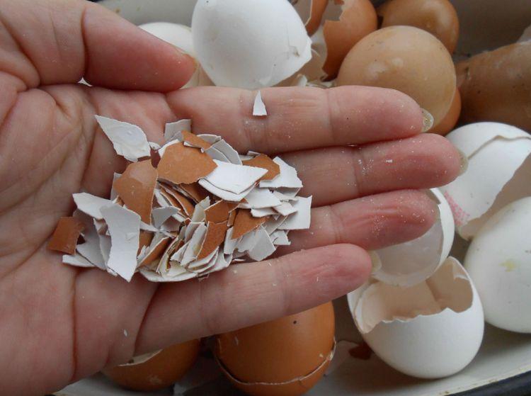 яичная скорлупа удобрение
