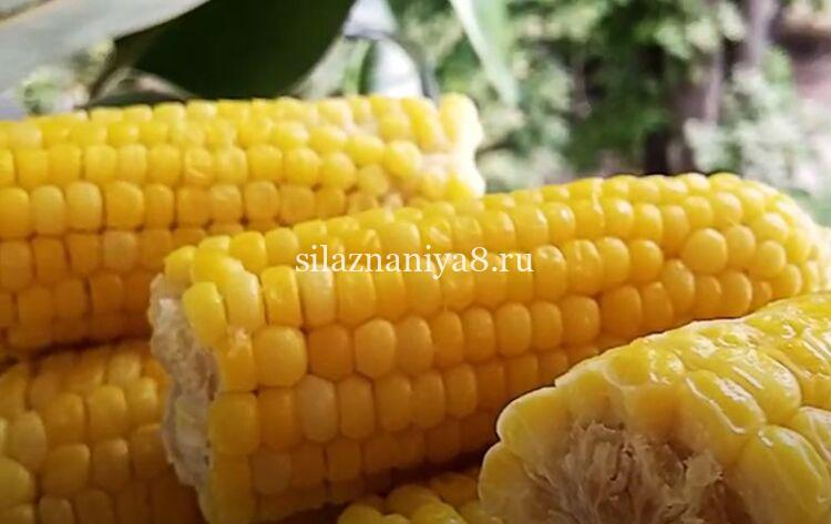 кукуруза вареная с солью