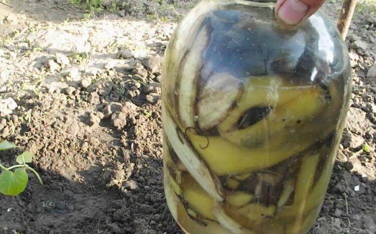 подкормка растений банановой кожурой