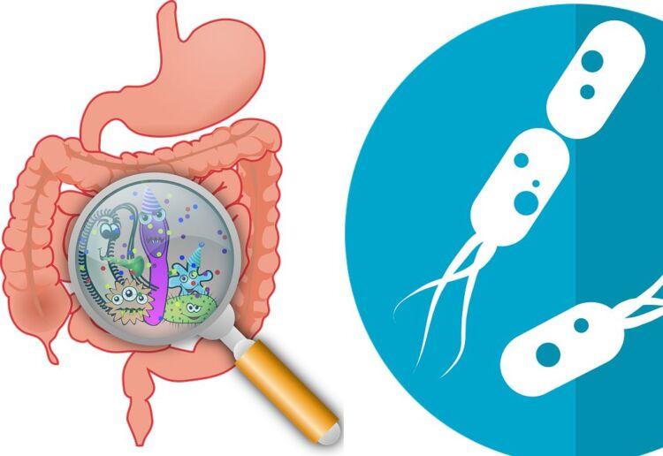 Дисбактериоз кишечника у взрослых