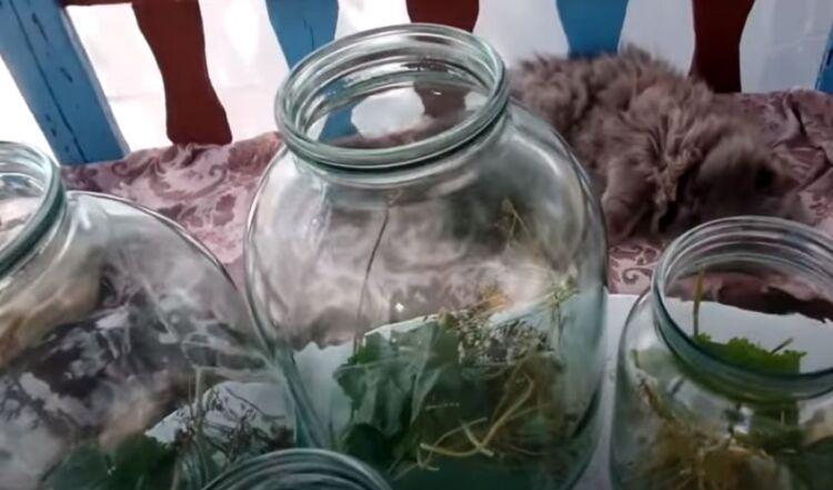 соленые огурцы на зиму в банках холодным способом под капроновую крышку