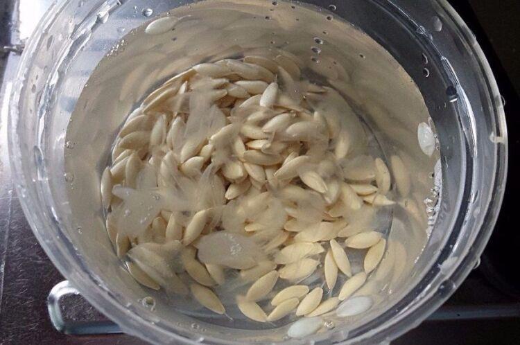 семена огурцов в воде