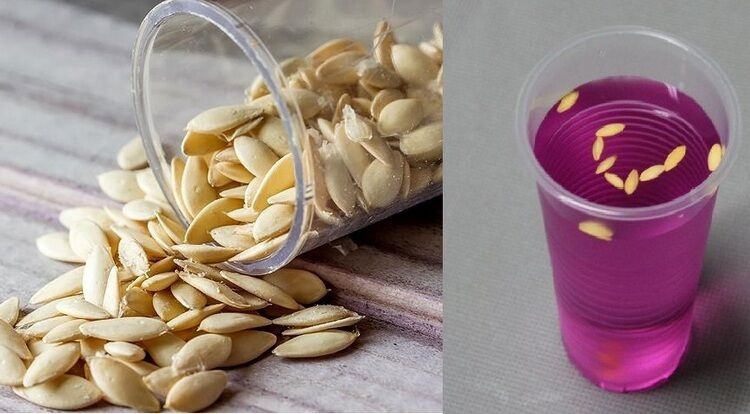 семена огурцов в марганцовке