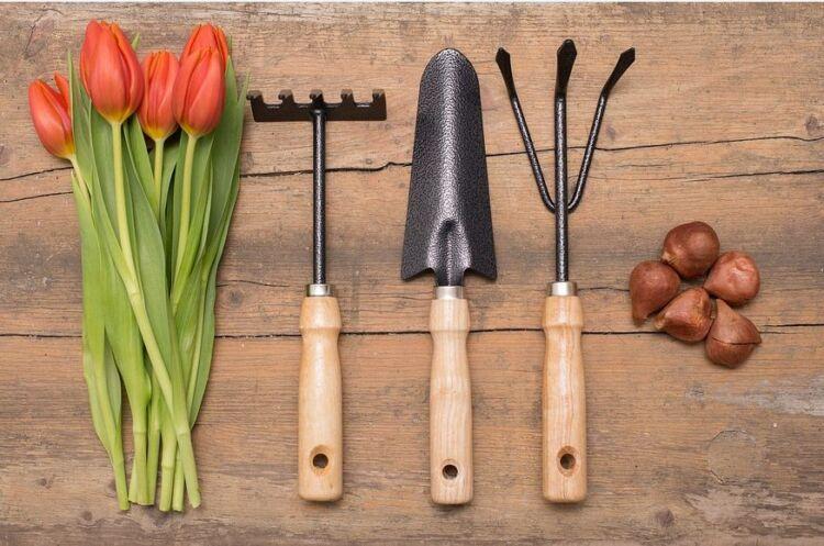 Когда сажать тюльпаны весной