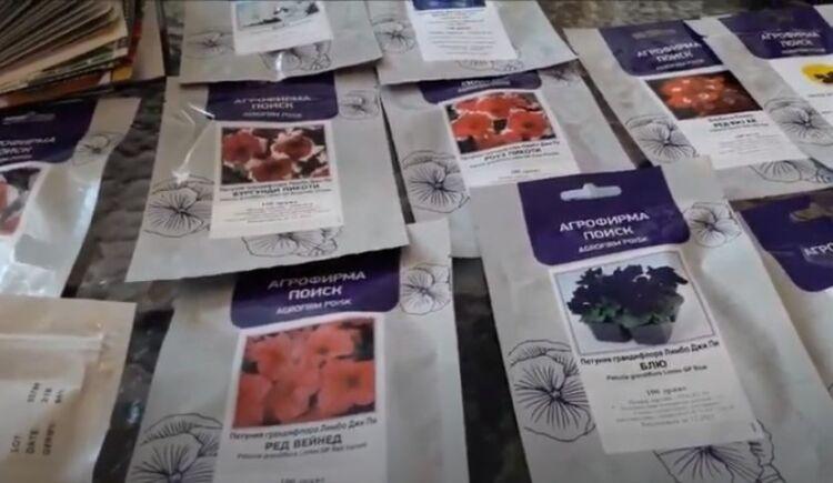 семена растения петунии