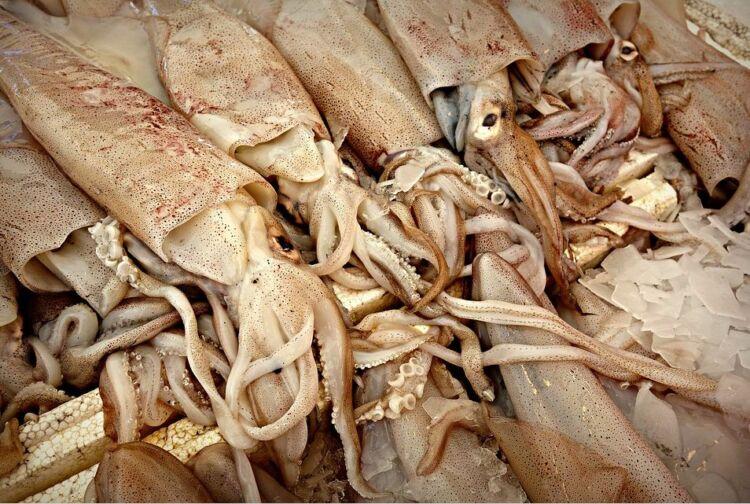 сырые кальмары
