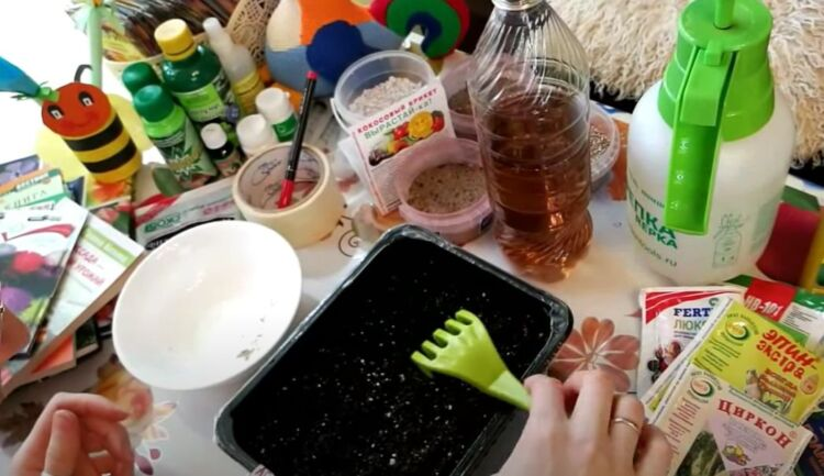 посадка семян астр на рассаду