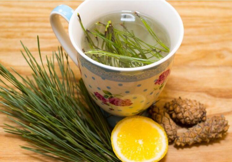 чай из иголок сосны
