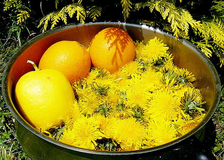 варенье из одуванчиков с апельсином и лимоном