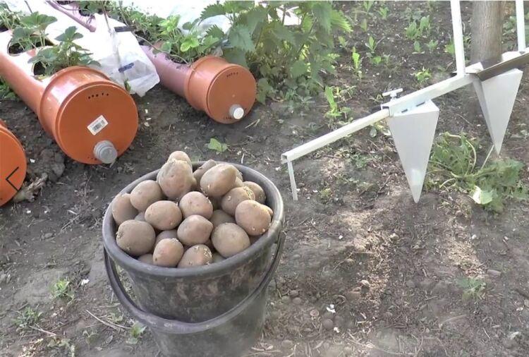 когда сажать картошку весной