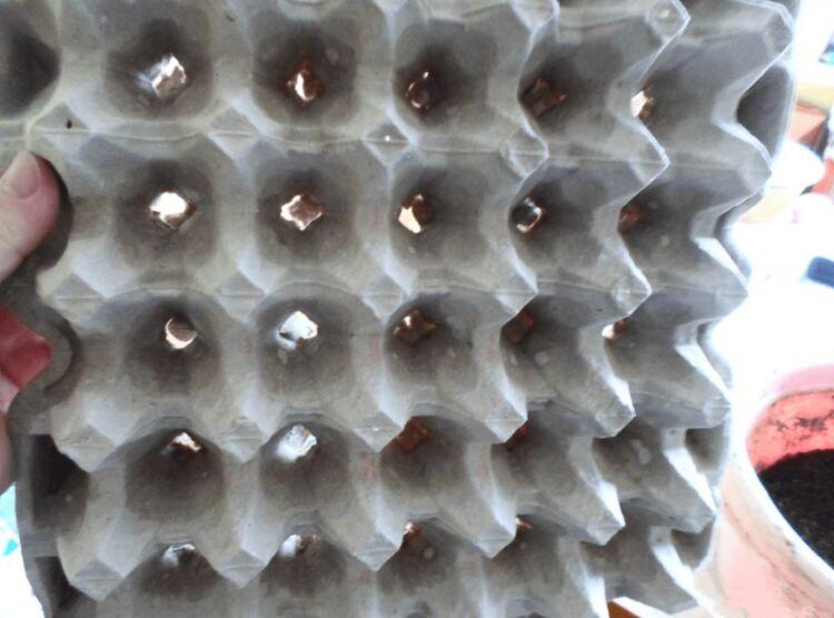 лук в лотке из под яиц выращивание