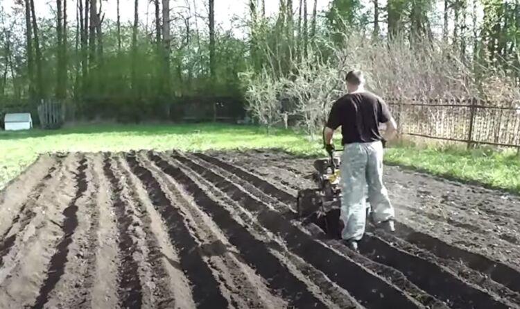 посадка картофеля под мотоблок