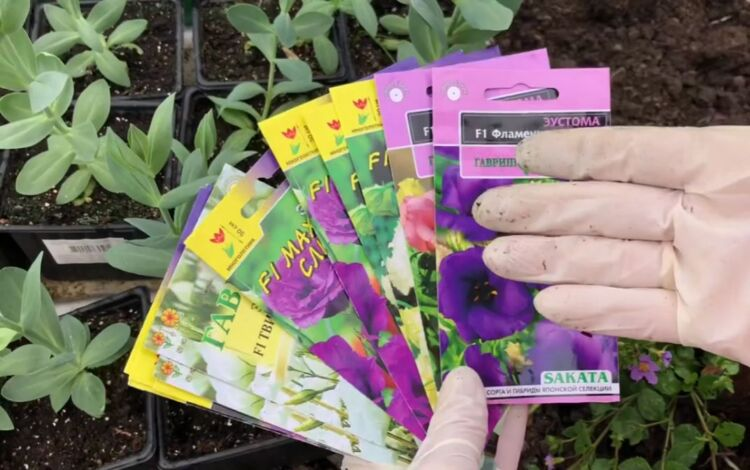 семена эустомы лизиантуса