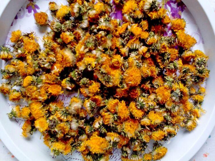 сухие сушеные цветы одуванчика