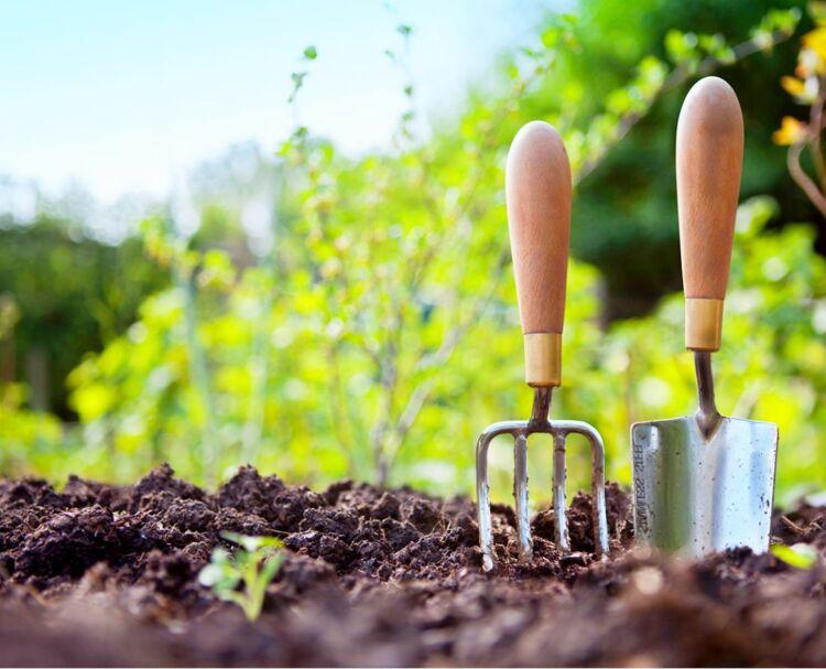удобрения для картофеля весной для урожая