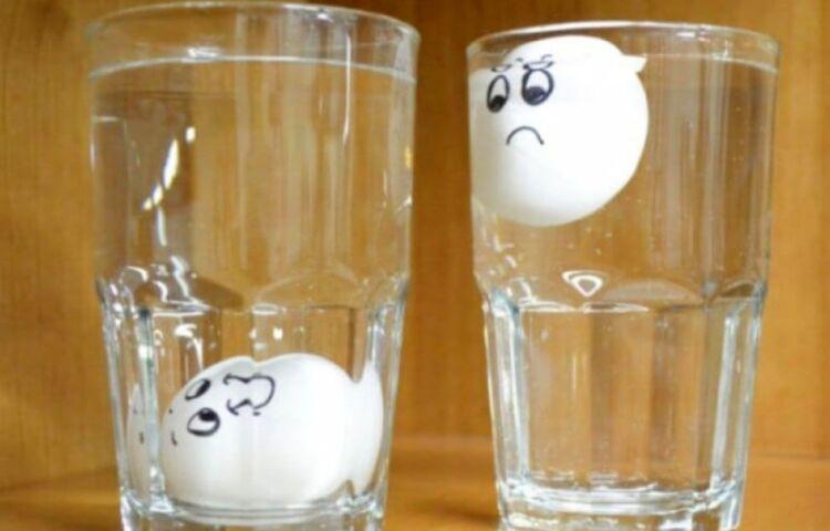 яйцо всплыло