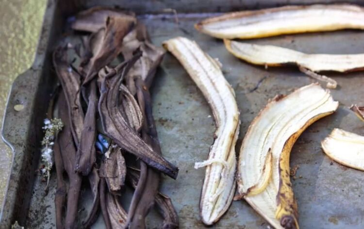 кожура банана как удобрения