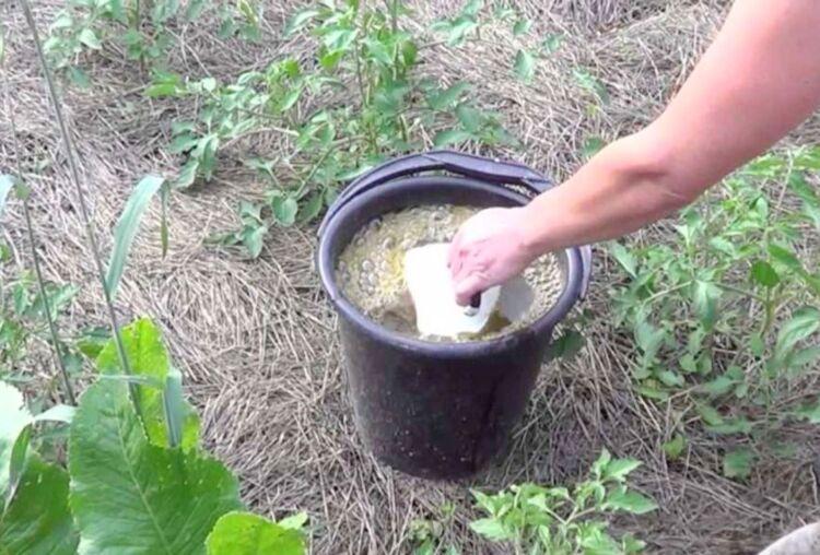 куриный помет как разводить водой