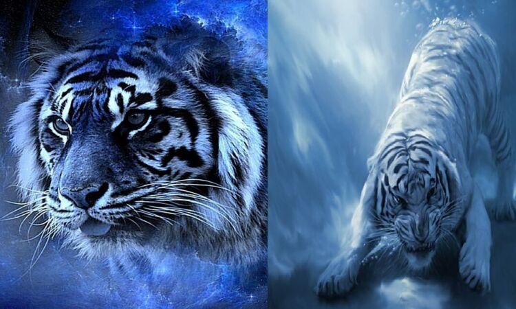 2022 год водяного тигра
