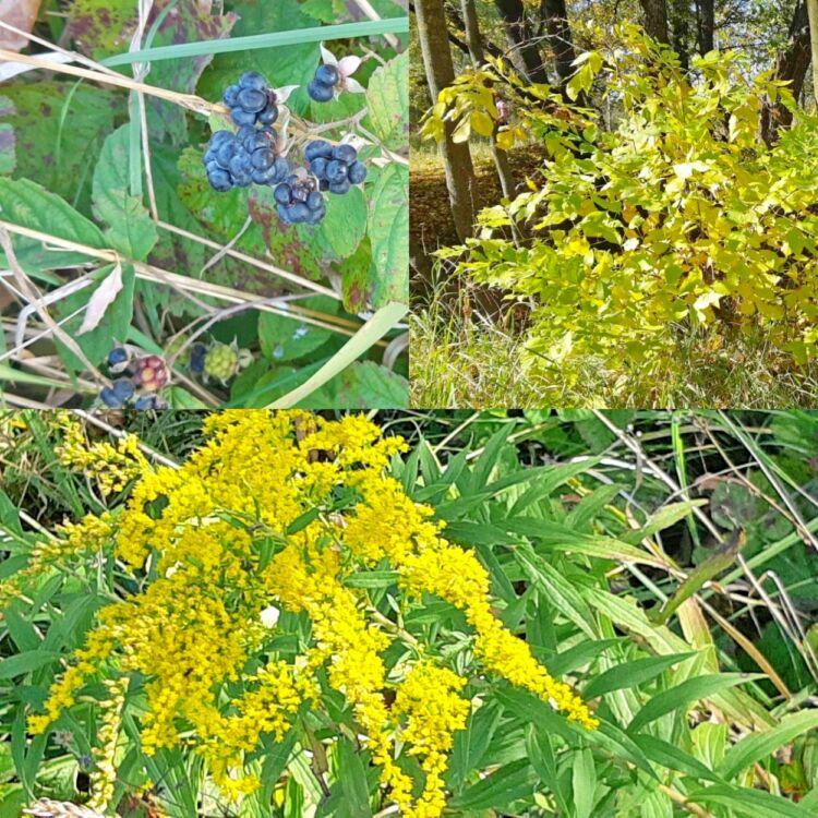лес осенью фотография